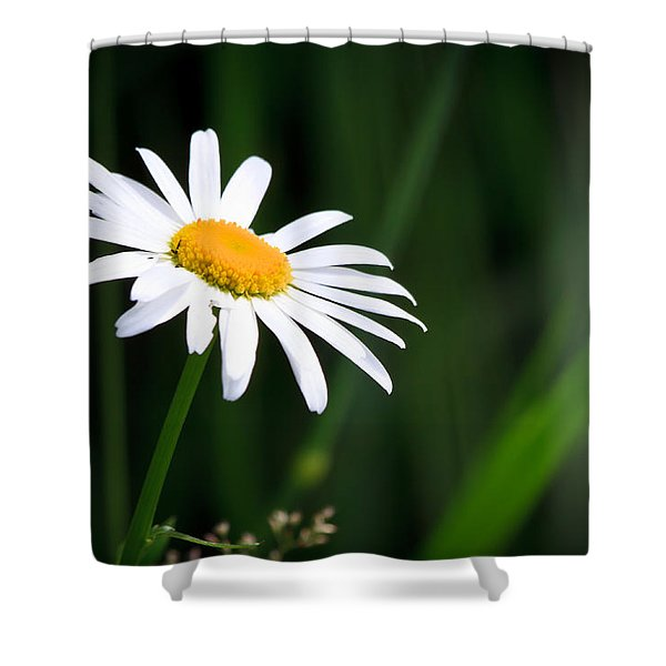 Daisy - Bellis Perennis Shower Curtain