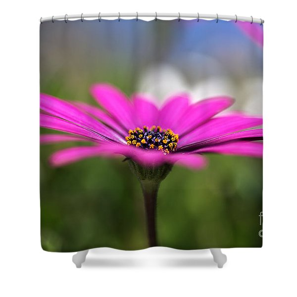 Daisy Dream Shower Curtain