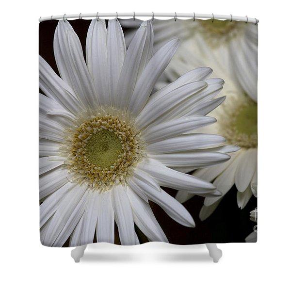 Daisy Photo Shower Curtain