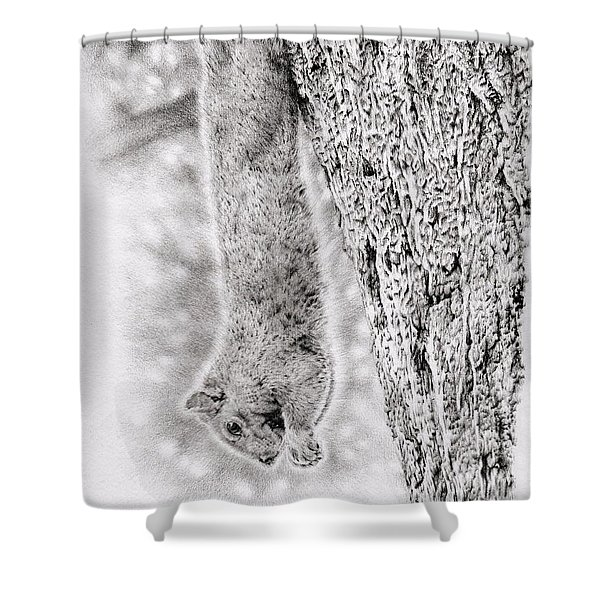 Dangling Squirrel Shower Curtain