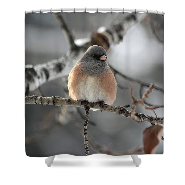 Dark-eyed Junco Shower Curtain