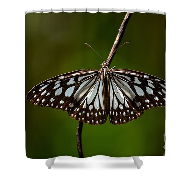 Dark Glassy Tiger Butterfly On Branch Shower Curtain