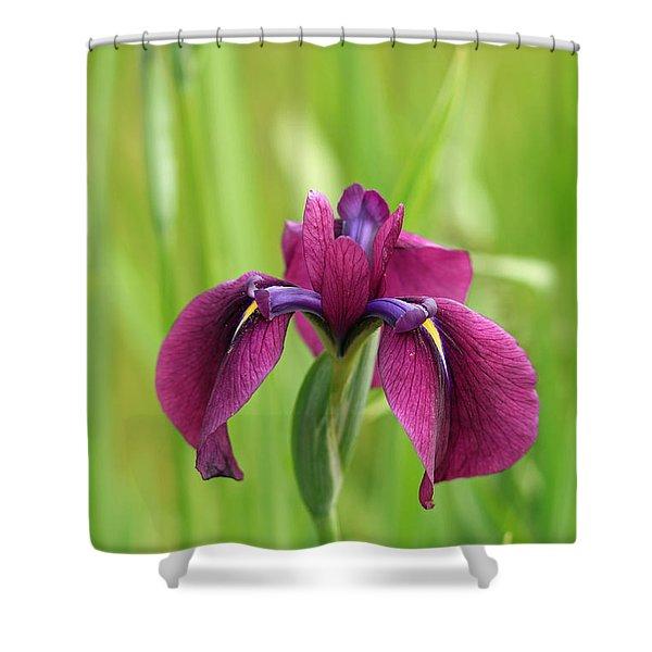Dark Magenta Iris Shower Curtain