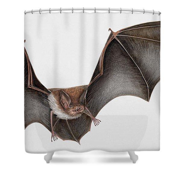 Daubentons Bat Myotis Daubentonii - Murin De Daubenton-murcielago Ribereno-vespertilio Di Daubenton Shower Curtain