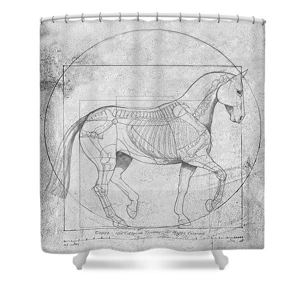 Da Vinci Horse Piaffe Grayscale Shower Curtain