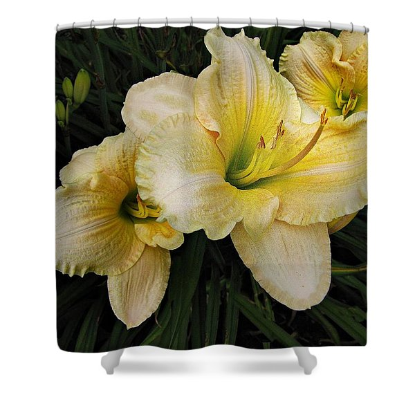 Day Lilies A Short Life Shower Curtain