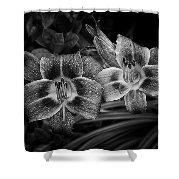 Day Lilies Number 4 Shower Curtain