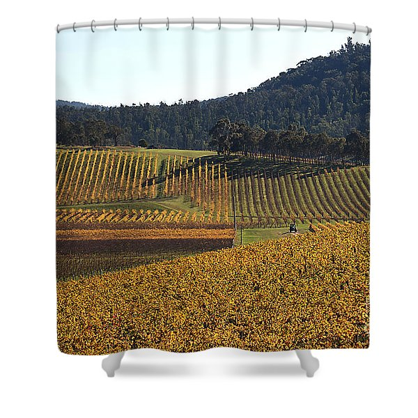golden vines-Victoria-Australia Shower Curtain