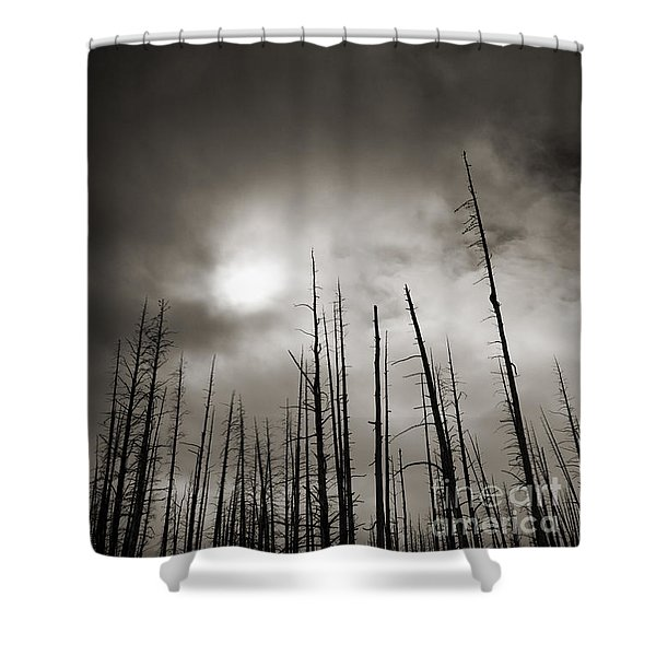 Dead Trees Shower Curtain