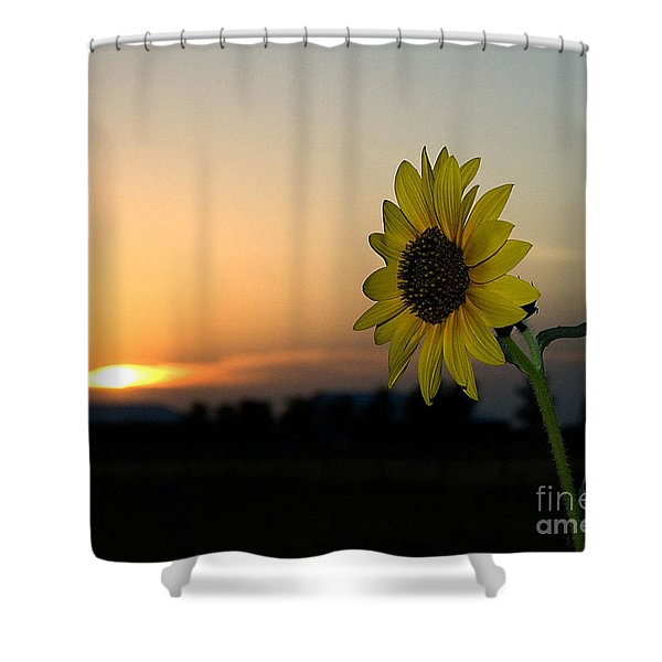 Shower Curtain featuring the photograph Sunflower And Sunset by Mae Wertz