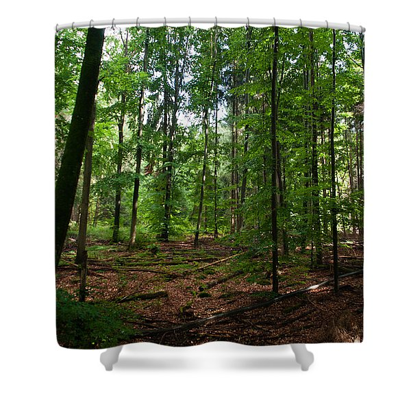 Deep Forest Trails Shower Curtain