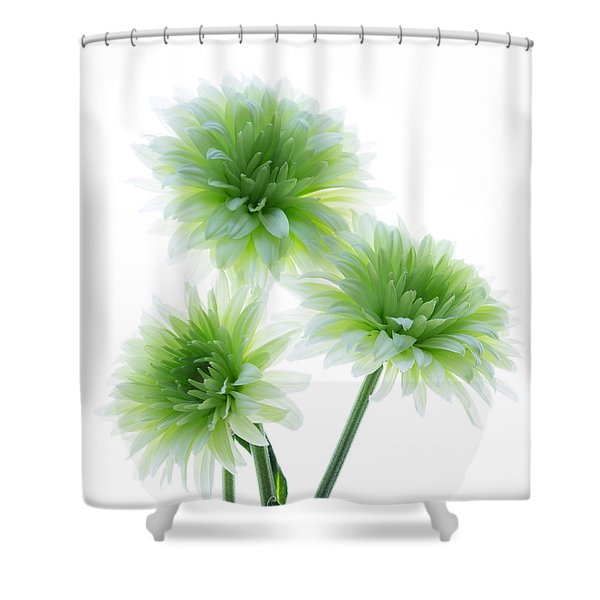 Deep In The Roots All Flowers Keep The Light Shower Curtain