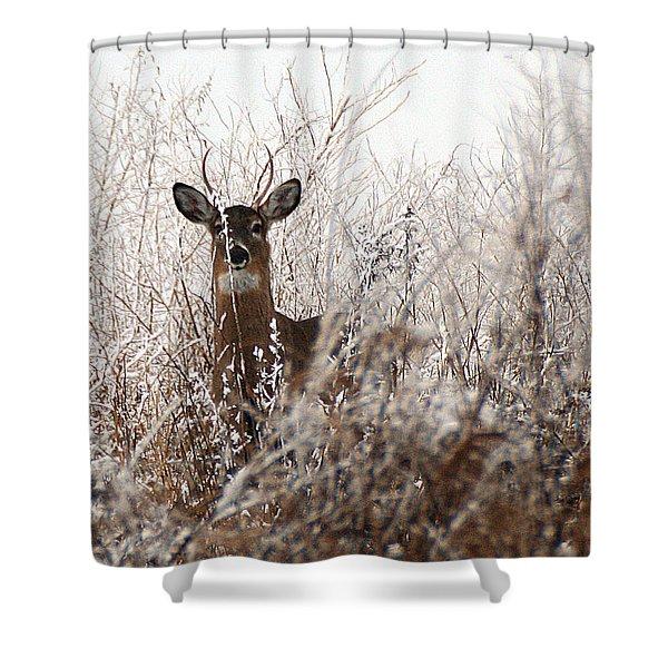 Deer In Winter Shower Curtain