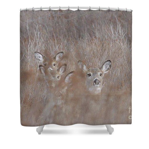 Deer Soft Shower Curtain