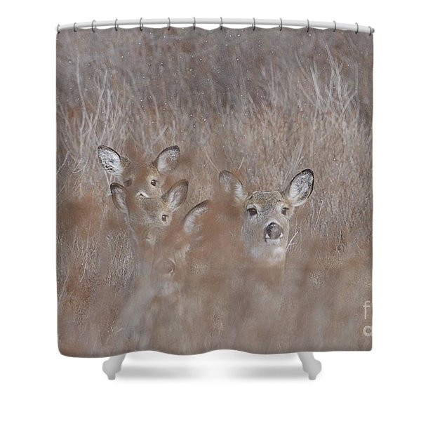 Deer Soft Shower Curtain