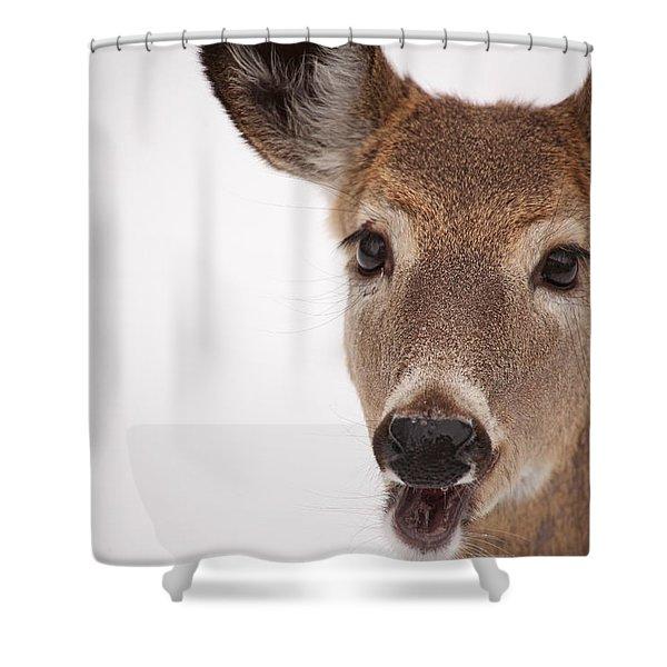 Deer Talk Shower Curtain