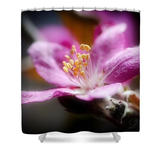 Delicate Glow Shower Curtain