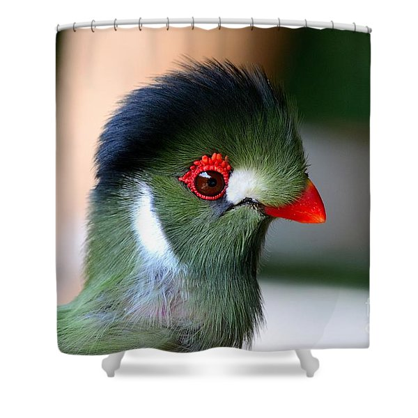 Delicate Green Turaco Bird With Red Beak White Patches And Black Crown Shower Curtain