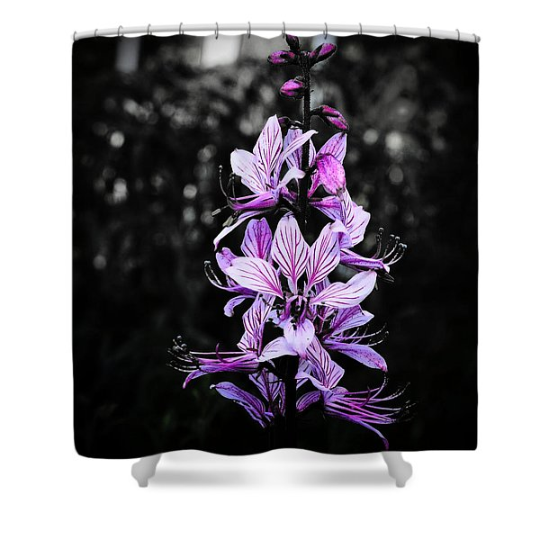 Delicate Violet Shower Curtain
