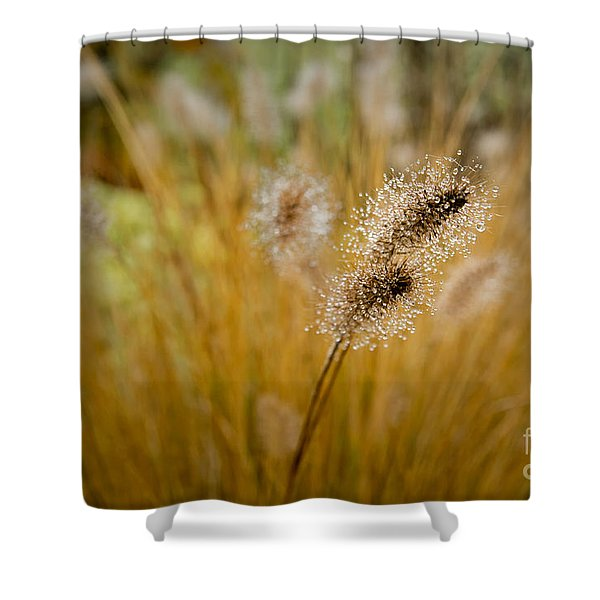 Dew On Ornamental Grass No. 4 Shower Curtain