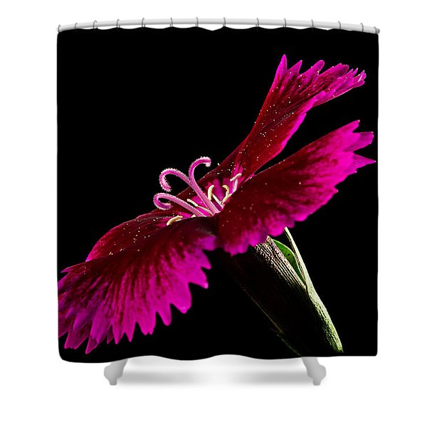 Shower Curtain featuring the photograph Dianthus by Mary Jo Allen