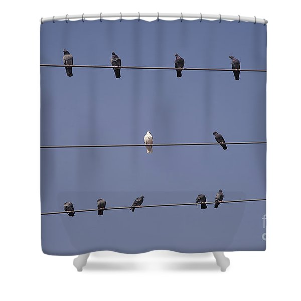 Different Shower Curtain