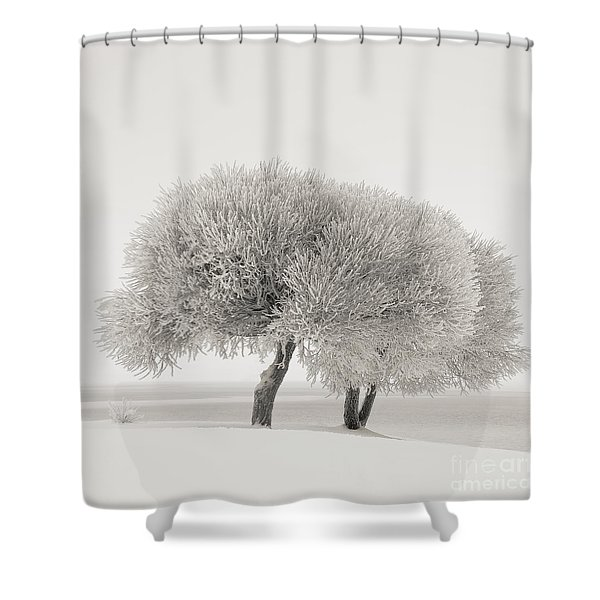 Different Season Shower Curtain