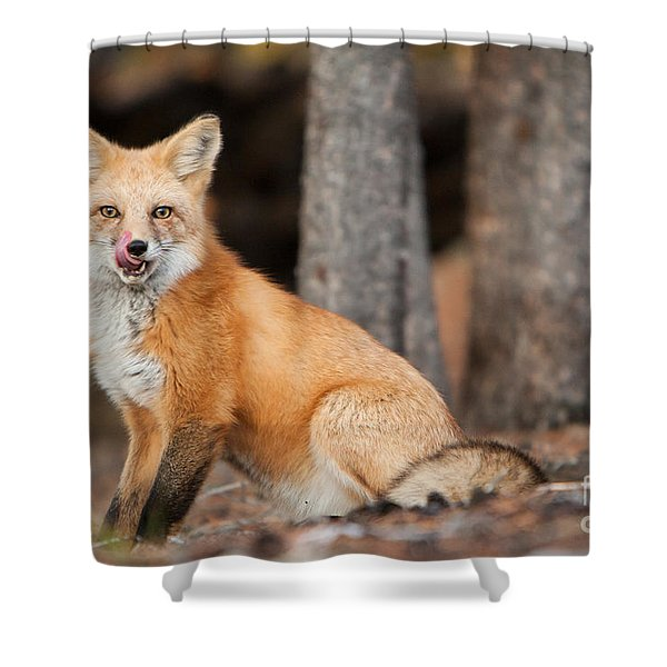 Shower Curtain featuring the photograph Dinner Was Good by John Wadleigh