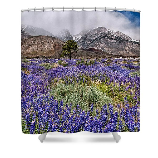 Division Creek Lupine Shower Curtain