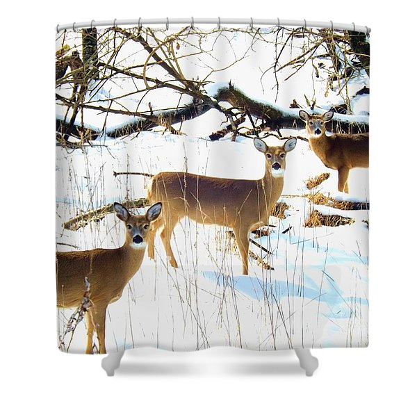 Does In The Snow Shower Curtain