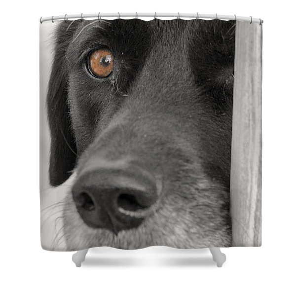 Dog Peek A Boo Shower Curtain