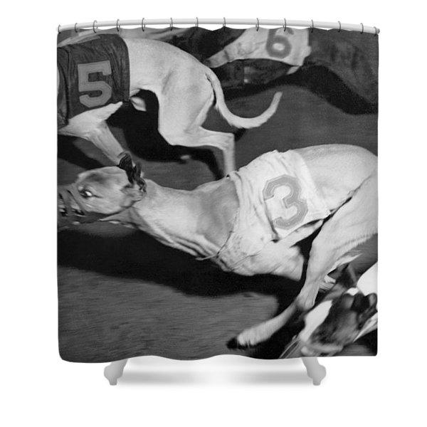 Dog Racing Track Shower Curtain