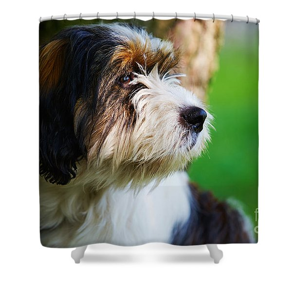Dog Sitting Next To A Tree Shower Curtain
