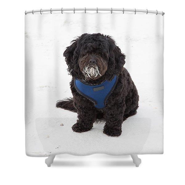 Doggone Good Beach Fun Shower Curtain
