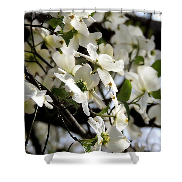 Dogwoods In The Spring Shower Curtain