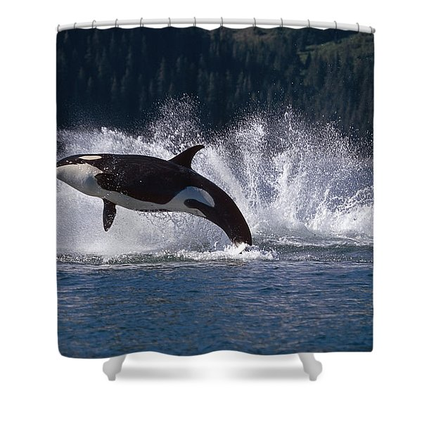 Double Breaching Orcas Bainbridge Shower Curtain