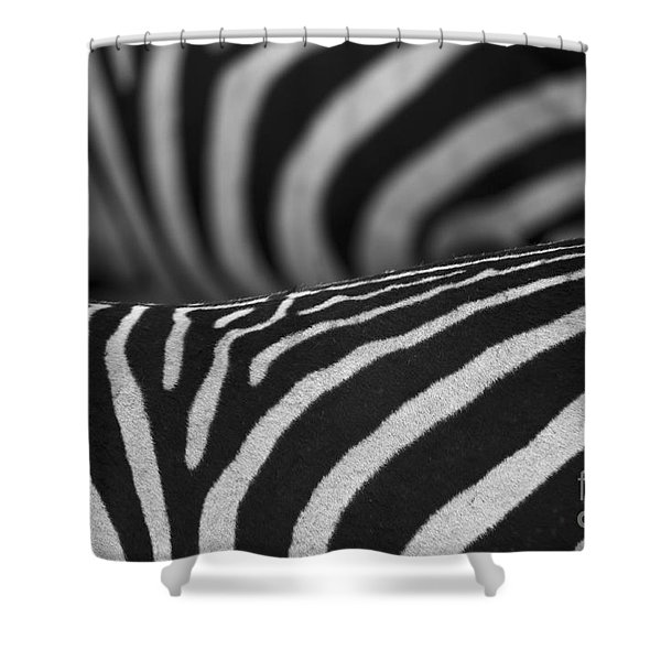 Double Vision... Shower Curtain