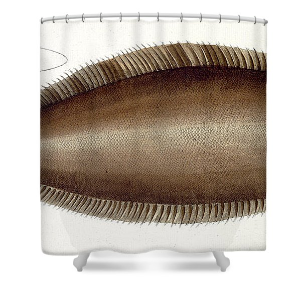 Dover Sole Shower Curtain