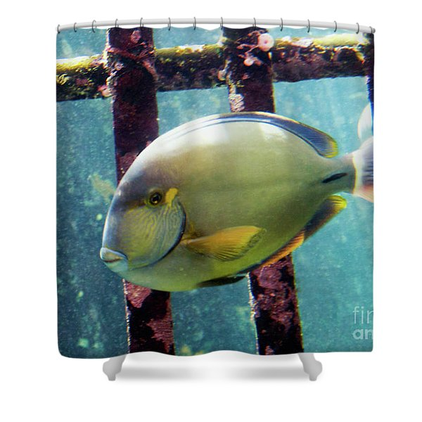 Down At The Shipwreck Shower Curtain