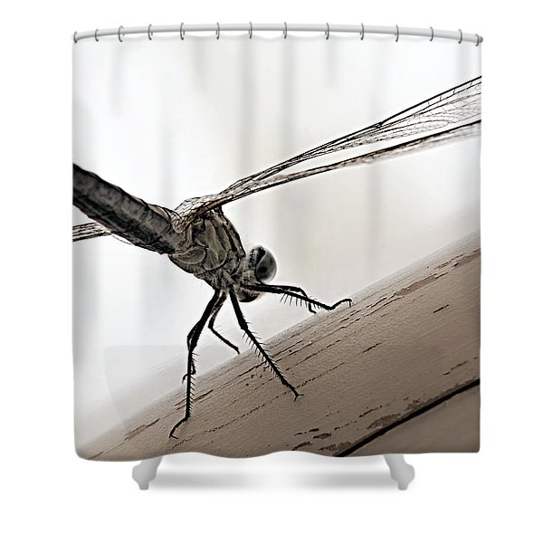 Dragon Of The Air  Shower Curtain