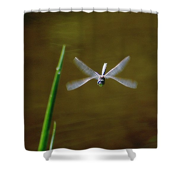 Dragonflight Shower Curtain