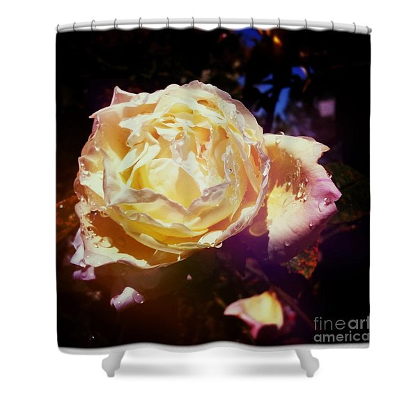 Dramatic Rose Shower Curtain