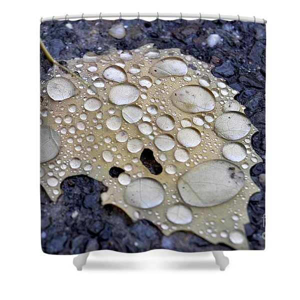 Drenched Leaf Shower Curtain