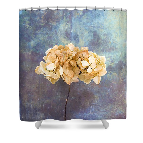 Dried Hydrangea Shower Curtain