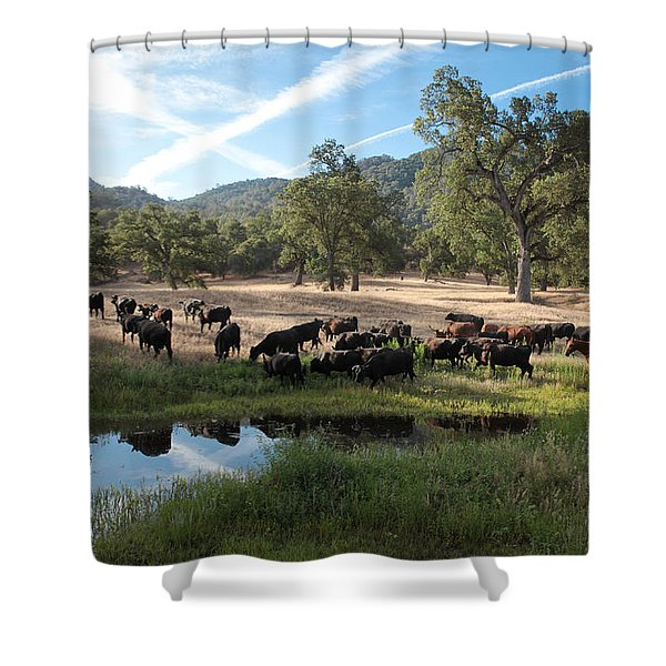 Drivin' Cattle Shower Curtain