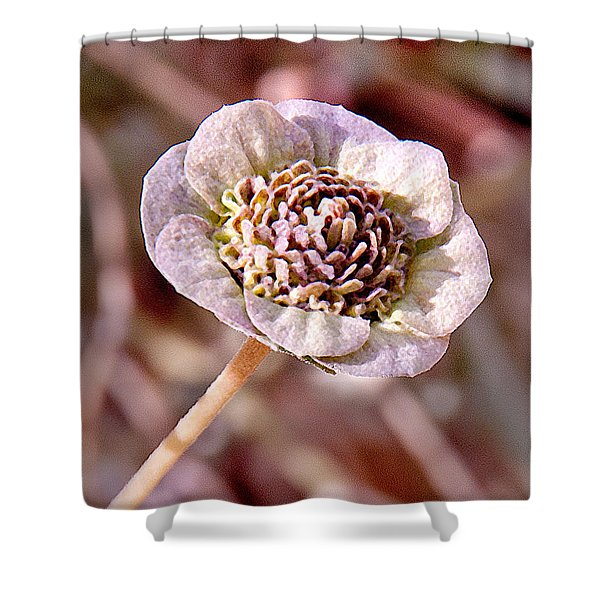 Shower Curtain featuring the photograph Dry Bloom by Mae Wertz