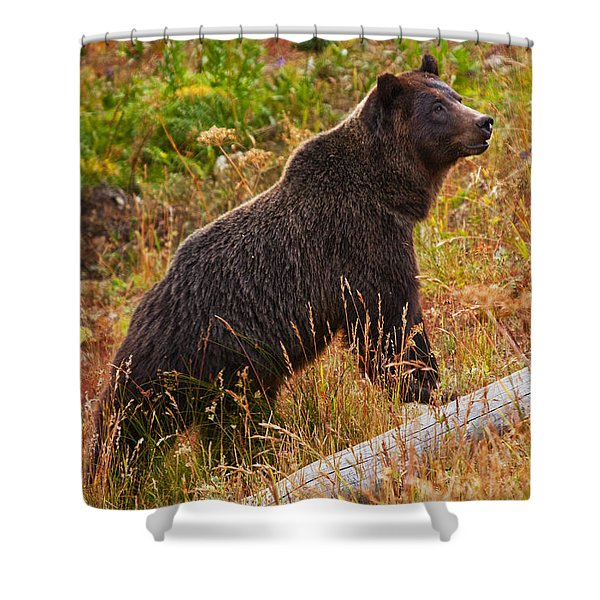Dunraven Grizzly Shower Curtain