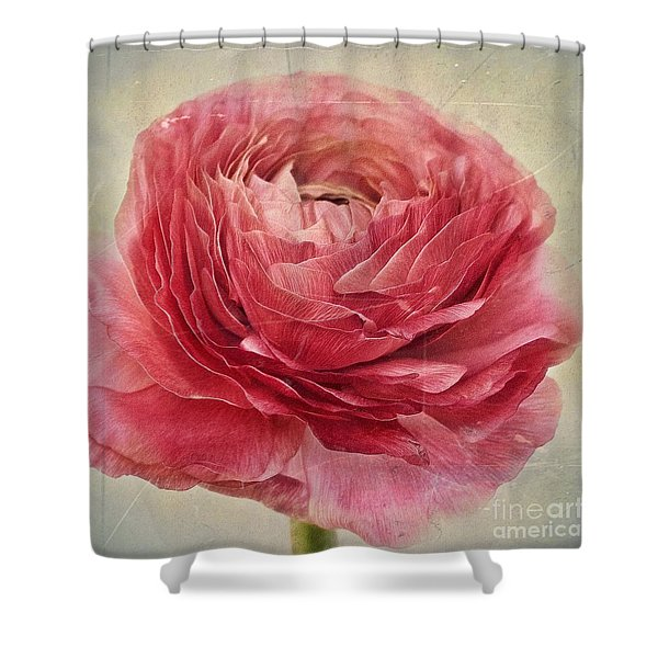 Dusty Pink Shower Curtain
