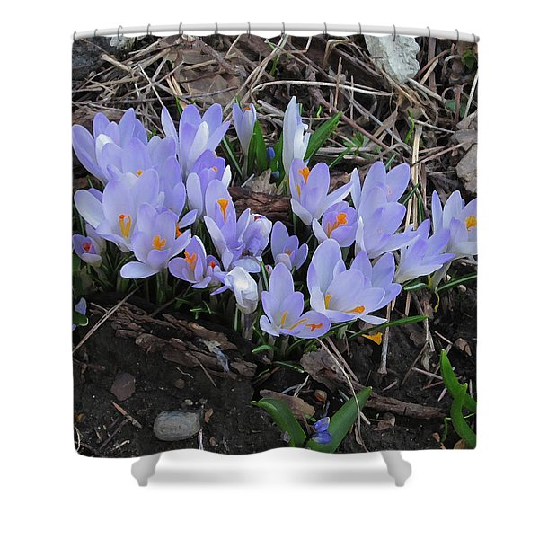 Early Crocuses Shower Curtain