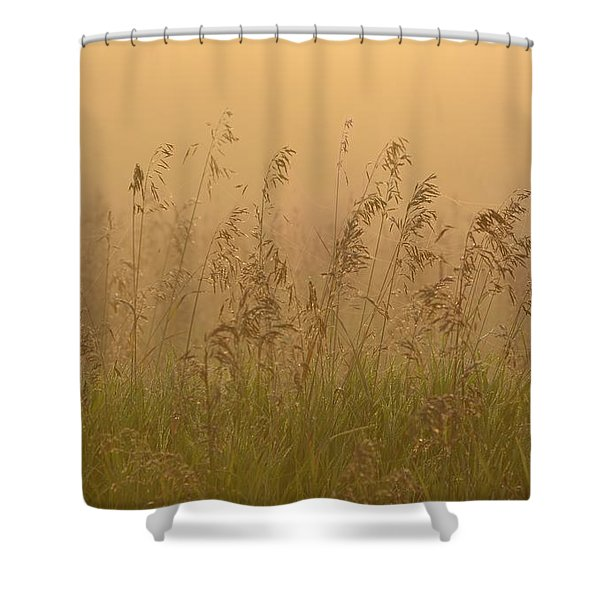 Early Morning Field Shower Curtain